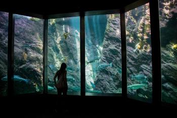 Aquarium du grand tombant